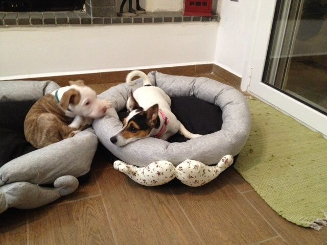 Handmade bed for dog