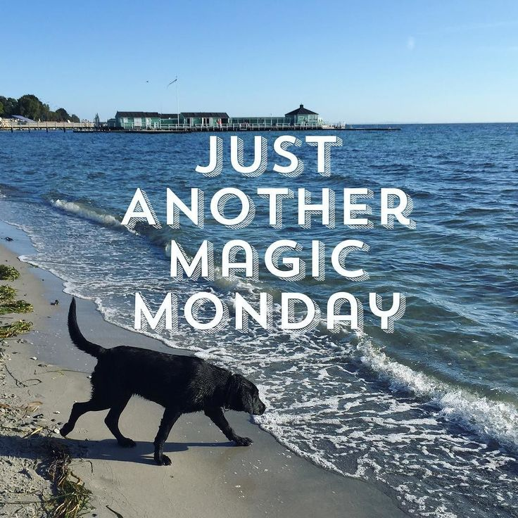 """Just Another Magic Monday""  Are you a #businessninja yet? Take your business to the next level! Get your FREE GIFT - see link in the bio.  Follow @lisegottlieb #quote #instaquote #businessninja #lisegottlieb #inspiration #quoteoftheday #words #business #businessman #businesswoman #motivation #entrepreneur #lifestyle #entrepreneurs #success #hardwork #entrepreneurship #businessowner #work #startup #money #inspiredaily #successful #startuplife #happiness #entrepreneurlife #desire #working…"