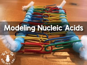 Modeling Nucleic Acids with Pipe Cleaners, Beads, and Paper Clips - Science and Math with Mrs. Lau