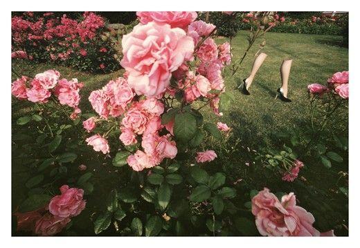Guy Bourdin, Charles Jourdan, 1979 , flowers, pink
