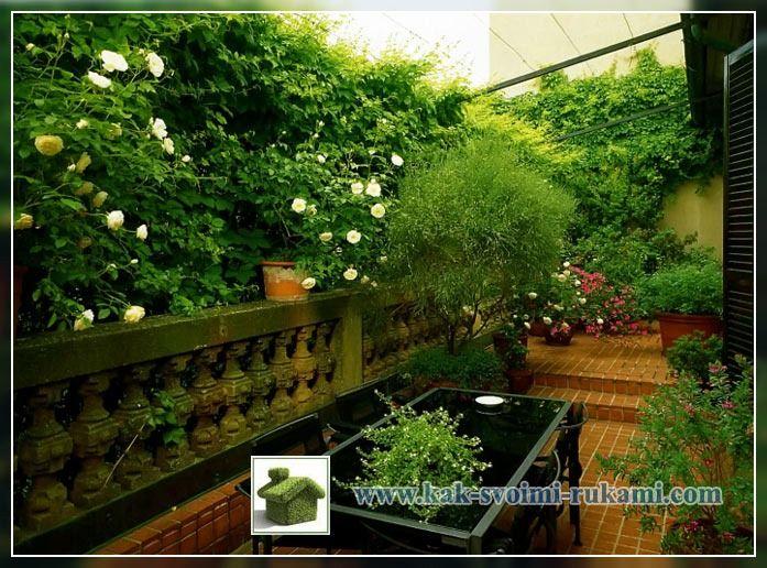 озеленение террасы
