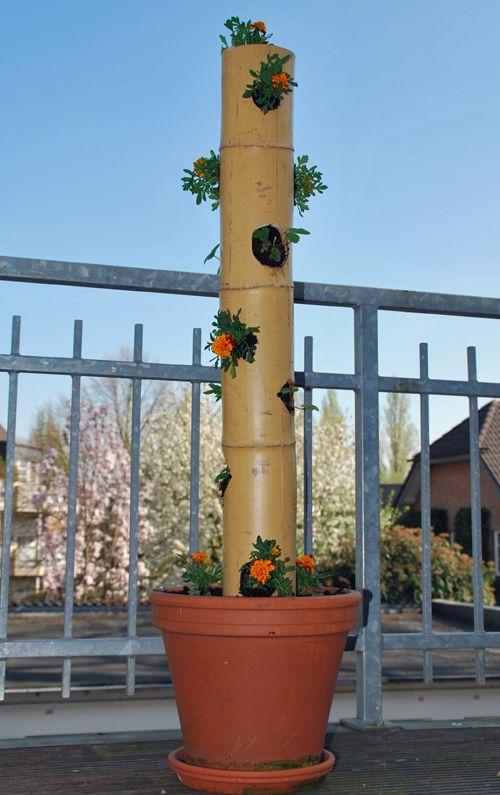 Der fertig bepflanzte Erdbeerbaum aus einem Bambusrohr