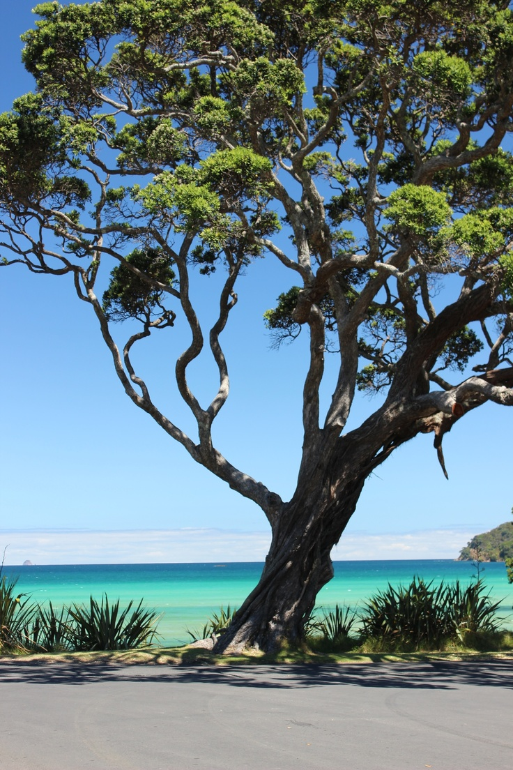 It's even in the trees. I took this photo on Great Barrier Island, Nz.