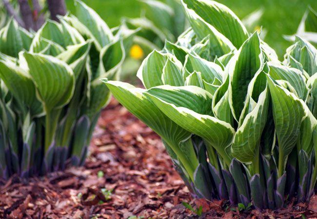 Har du en have, der ligger i skyggen? Har du svært ved at få planterne til at vokse? Her får du gode råd til, hvilke planter, der kan vokse i skyggen og hvordan du passer dem.
