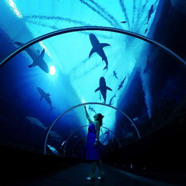 💙 . . . . #сингапур#приключения#сентоза#акваруим#подводой#мир#акулы#sentosa#singapore#travelgram#tourism#picoftheday#scare# by (julia_dotsenko). приключения #tourism #акваруим #sentosa #акулы #подводой #picoftheday #мир #сингапур #scare #singapore #сентоза #travelgram