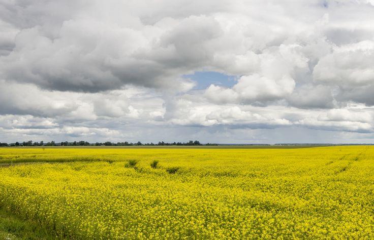 Field. by Yury  on 500px