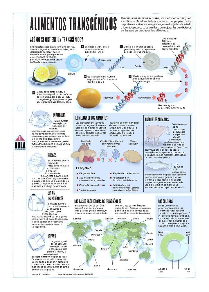 Infografia Alimentos Transgenicos Alimento Transgenico Biotecnologia Alimentos Dibujos
