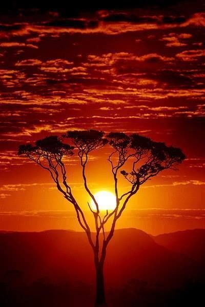 African #sunset. Wild and red! TOP 20 perfect sunset views on Black Monkey blog: Top 20 #sunset views in the world on Black Monkey blog: http://the-black-monkey.com/blog/top-20-sunsets-in-the-world/