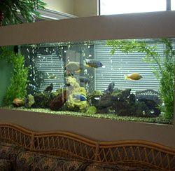 design of your aquarium