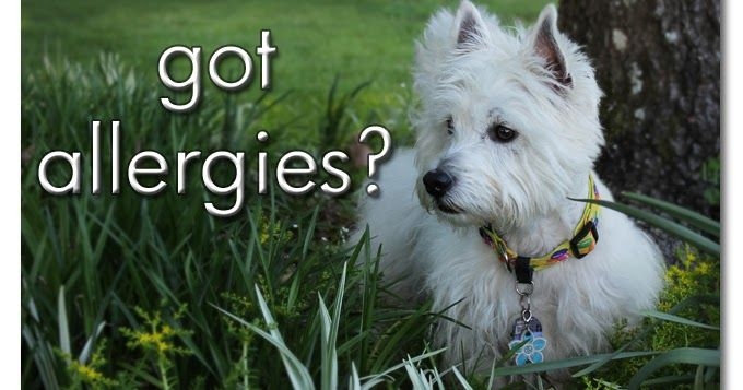 Two DIY recipes for stopping your dog's itching and ear infections!