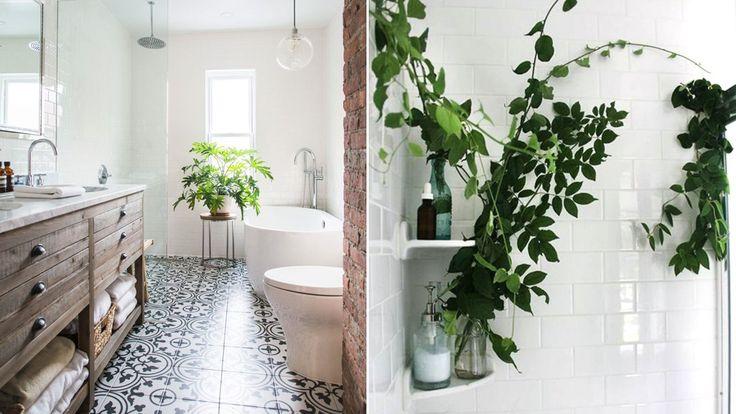 5 tåliga växter att ställa i badrummet
