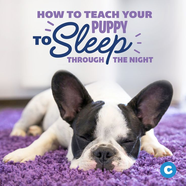 How to get a puppy to sleep through the night sleeping