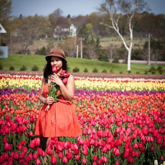 Beauty & Tulips by jeffdungca