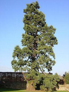 Descopera plantele: Copac