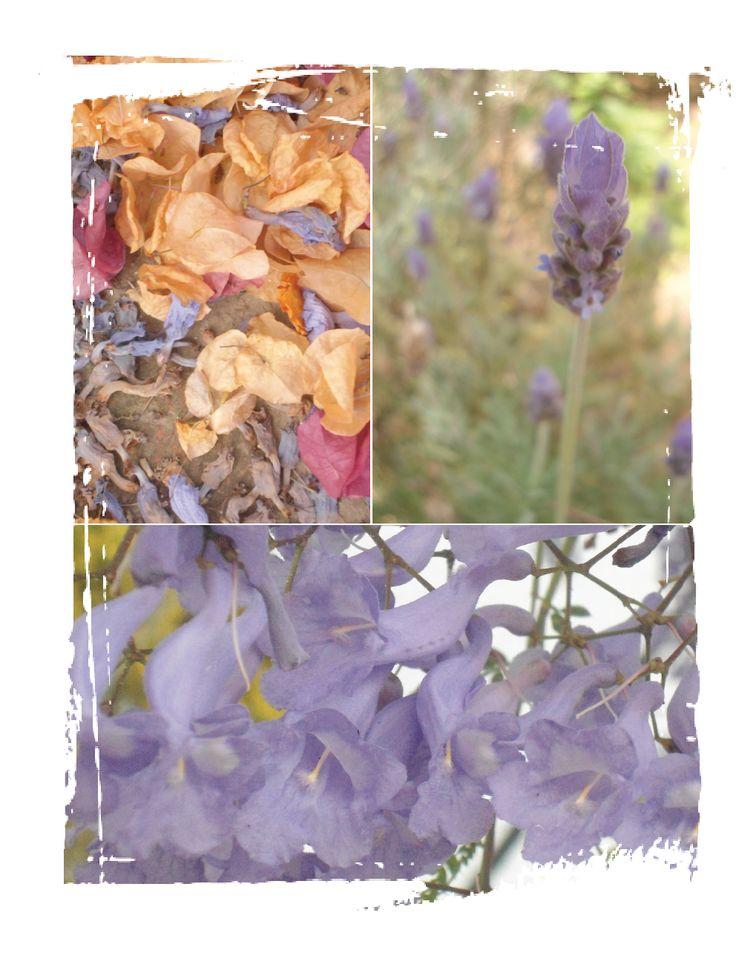 Jacaranda and lavender