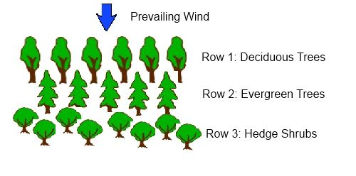 Hedge Shrubs and shelter trees can be used effectively to create shelter for a windswept garden. Rows of trees and coastal hedging plants will make a wind deflecting shelter belt.