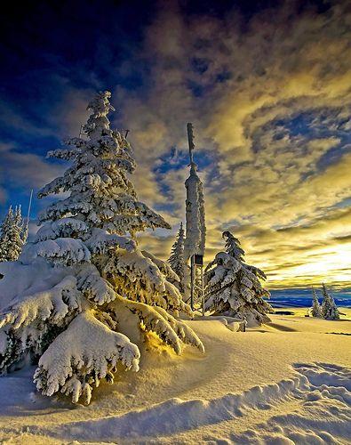 Canadian Gold! by Christopher J. Morley, via Flickr
