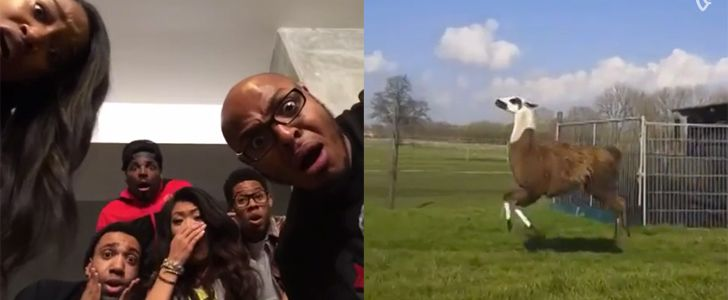 The Funniest Vines You'll Ever See