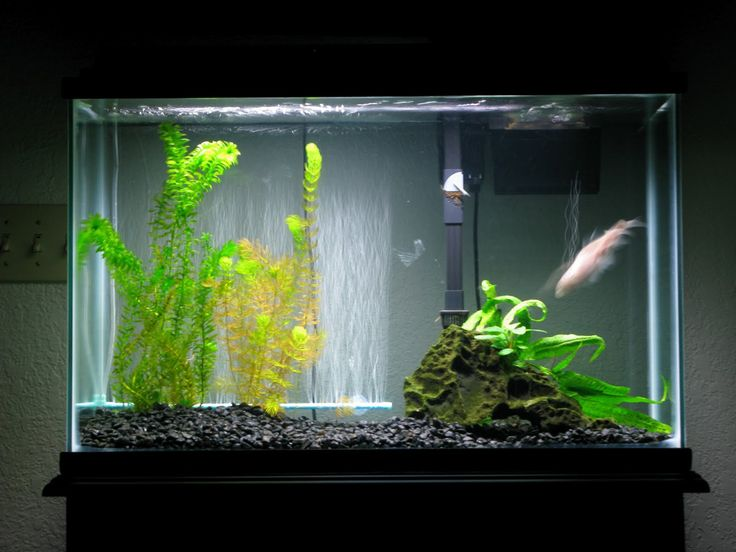 Best Fish Tank Decoration ~ http://www.lookmyhomes.com/amazing-fish-tank-decoration/