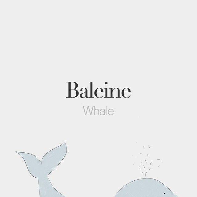 Baleine (feminine word) | Whale | /ba.lɛn/  Drawing: @beaubonjoli.