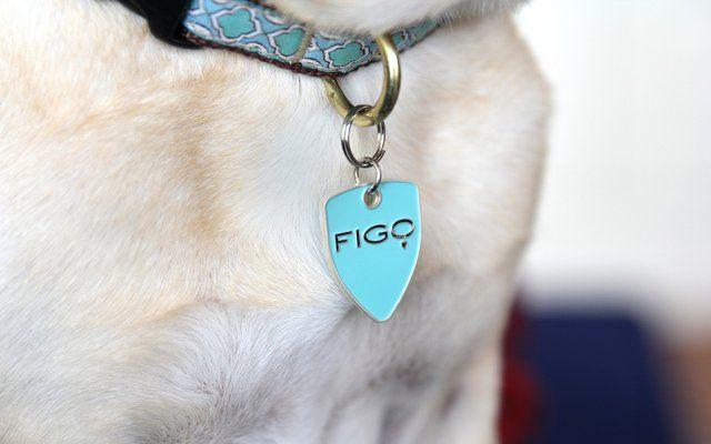 Let's Talk: Pet Health Insurance - Top Dog Tips
