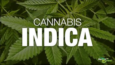 Cannabis Indica: As Explained By Medical Jane