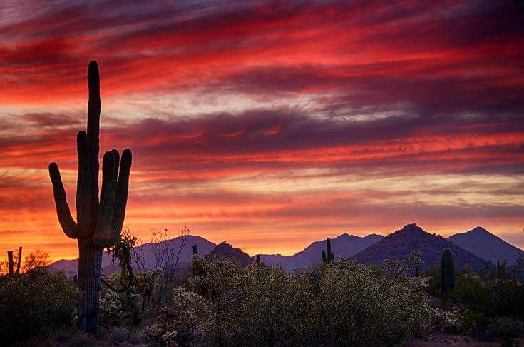 Sonoran Desert Sunset Red Hot Sonoran Sunset Photograph
