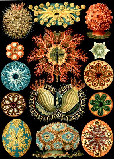 Counterform: Ernst Haeckel Art Forms in Nature