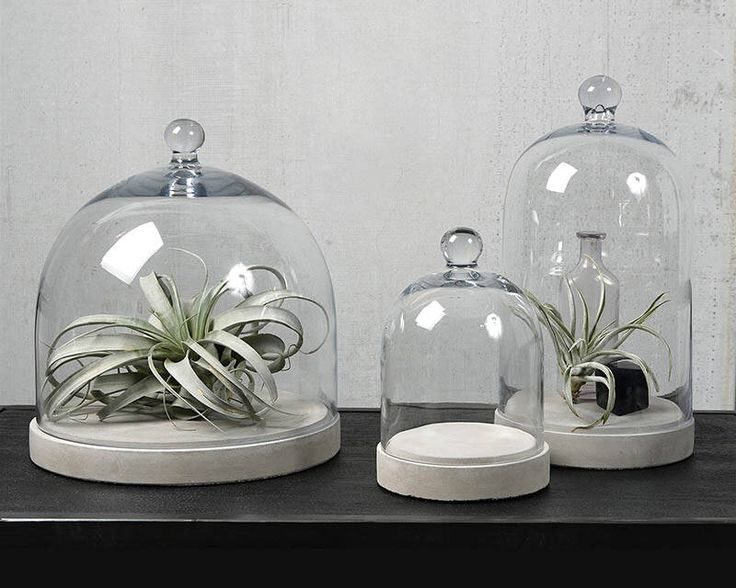 As melhores ideias de glass dome display no pinterest