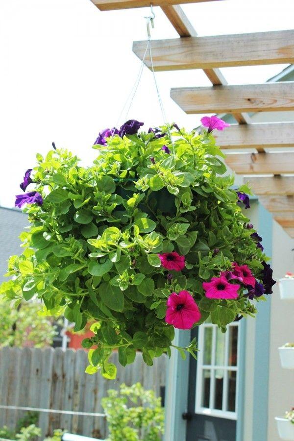 Es muy fácil preparar una cesta colgante aunque pueden comprarse montadas y con las plantas crecidas resultan caras, así que vamos a ver cómo podemos prepararla nosotros mismos