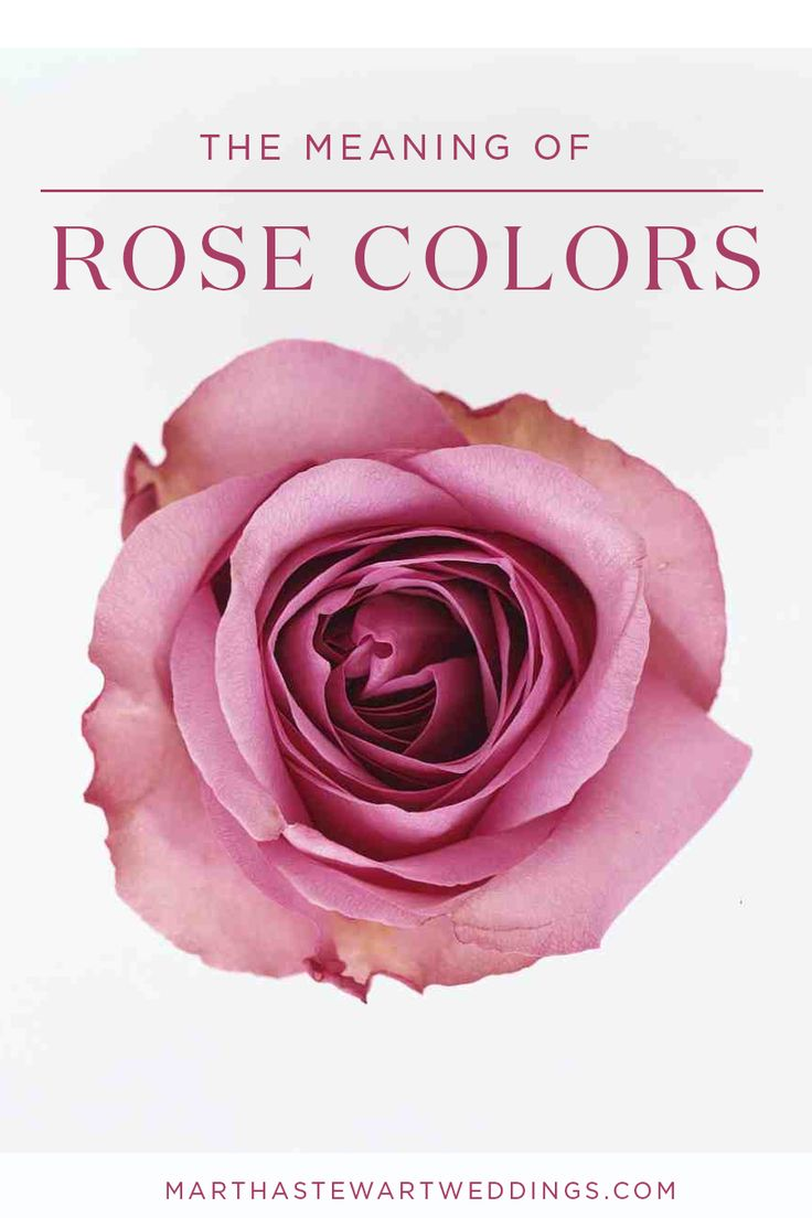 The Meaning of Rose Colors | Martha Stewart Weddings | Wedding Bouquets | Pinterest | Martha ...