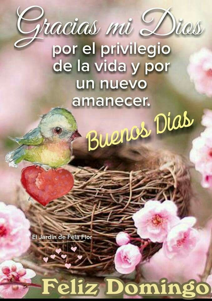 Feliz domingo ❤️ | Birthday wishes for daughter, Morning greeting, Good  morning messages