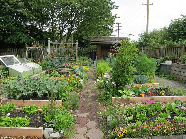 Planning a vegetable garden layout can be tricky, but these great tips will help you plant the edible garden of your dreams.