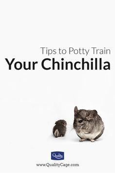 Tips to potty train your chinchilla