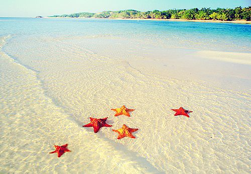 autumn star fish : Pink Summer, Buckets Lists, Clear Water, Summer Wedding Favors, The Ocean, Beautiful Places, Favors Ideas, Summer Photography, The Bahama