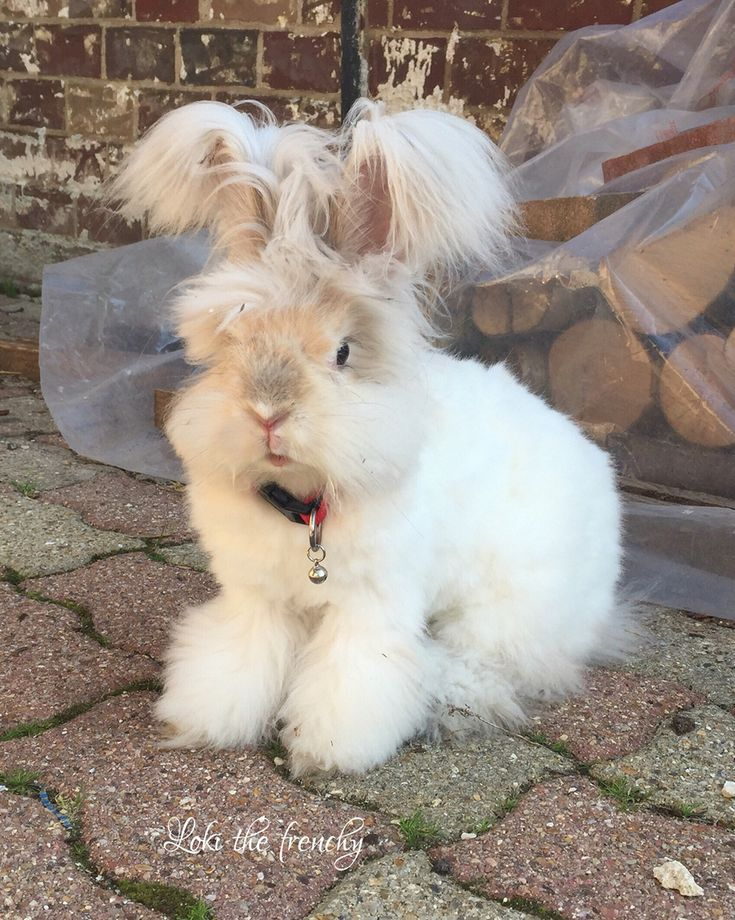 funny animals with big ears