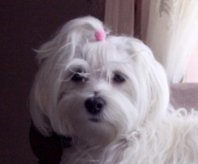 dog pics with names | Female Dog Names - TSheyka