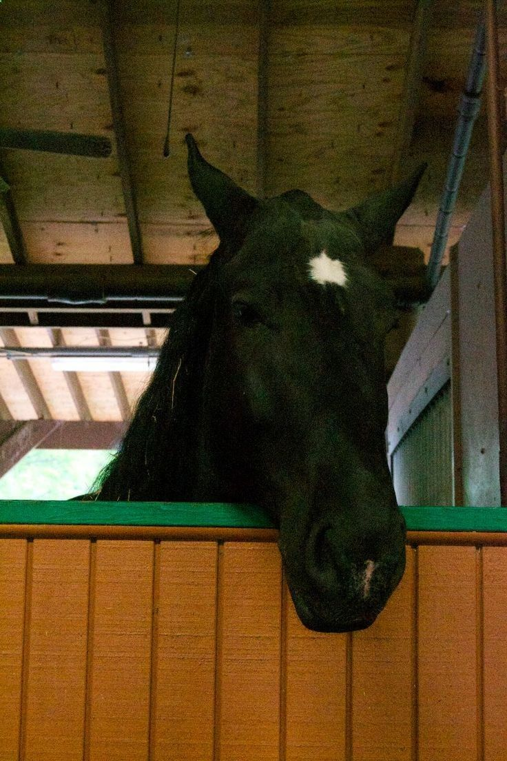 Love horses? Need a break from your hectic park schedule? Then you might want to visit the Tri-Circle-D Ranch at Fort Wilderness. (Plus it can be fun to get to and you can enjoy a nice reasonably-priced buffet meal nearby at Trails End.