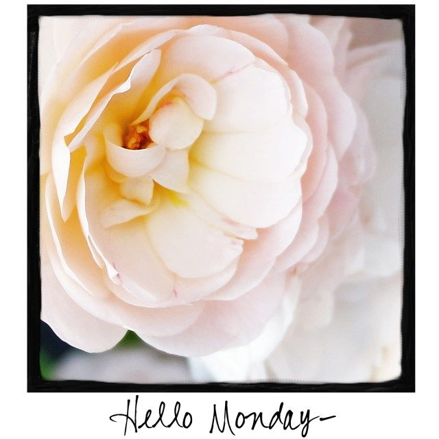 Hello Monday! Come visit www.facebook.com/awarmhello to find photos to share with your friends and followers each day of the week!