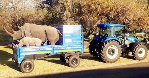 http://www.kormorant.co.za/2014/08/golfing-for-rhinos-on-a-tractor/  The Rhino Orphanage