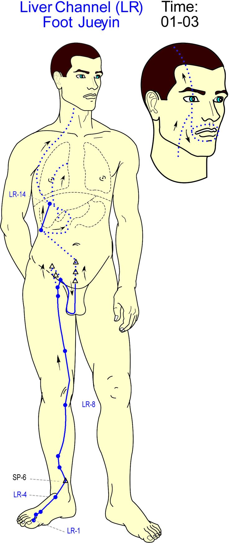 Liver Channel Repinned by www.academ.nl/ & www.medischeqigong.com #qigong #acupuncture #health