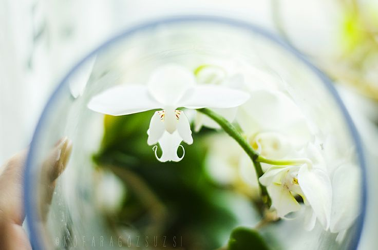 spring by kofaragozsuzsiphotos