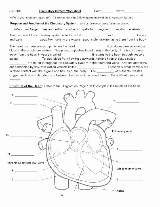 Heart Diagram Worksheet Blank Skeletal Diagram Label