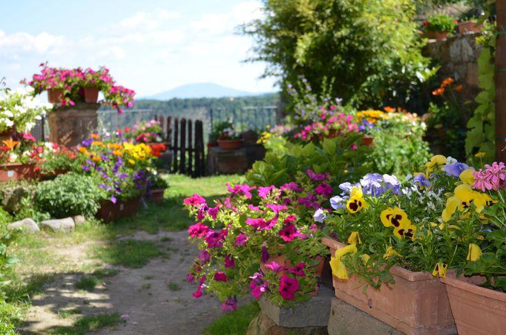 Giardino, fiori, pace