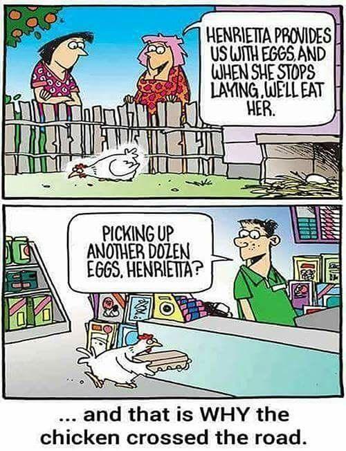 Funny #raisingchickenshumor #chickencoophumor