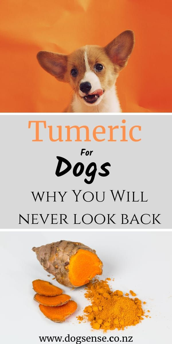 Can You Give Canines Tumeric? (Or Turmeric?!) | Canine Sense New Zealand