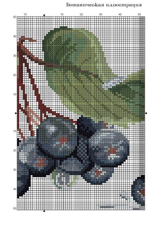 Gallery.ru / Фото #1 - черноплодная рябина - irisha-ira