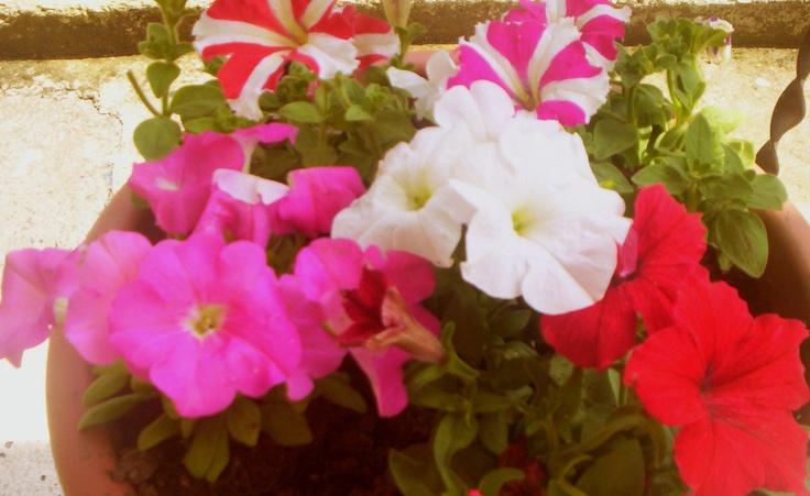 My flowers :)