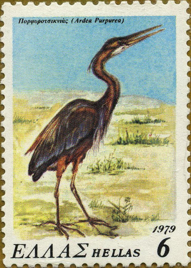 Aves en vías de desaparición Ardea purpurea Garza imperial 15/10/79 Grecia