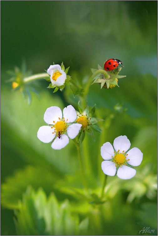 Ladybugs are great for your vegetable garden. You can pick up a tub of them from Agway $10.